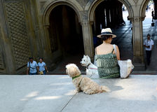 Cães de estimação que esperam pacientemente com seu ser humano Imagem de Stock Royalty Free