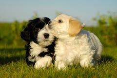 Cães de filhote de cachorro preto e branco imagem de stock