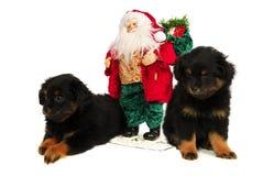 Cães de filhote de cachorro sonolentos com Santa Imagem de Stock Royalty Free