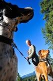 Cães de passeio Fotos de Stock Royalty Free