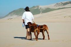 Cães de passeio da mulher Fotos de Stock Royalty Free