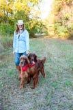 Cães de passeio da mulher Foto de Stock Royalty Free