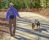 Cães de passeio da mulher na trela Foto de Stock Royalty Free