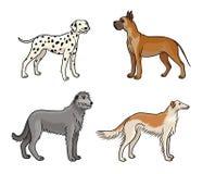 Cães de raças diferentes na cor set3 - ilustração do vetor ilustração stock