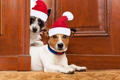Cães de Santa do Natal fotos de stock royalty free
