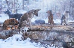 Cães desabrigados no inverno fotografia de stock royalty free