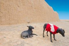 Cães despidos do Peru imagem de stock royalty free