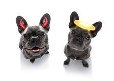 Cães direitos e errados fotos de stock