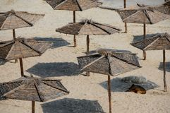 Cães dispersos sob guarda-chuvas de praia Fotografia de Stock Royalty Free