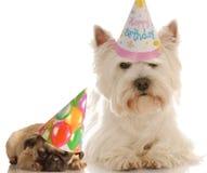 Cães do aniversário imagens de stock