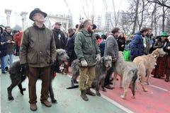 Cães do cão caçador de lobos irlandês na celebração do dia do ` s de St Patrick em Moscou Fotografia de Stock