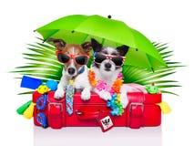 Cães do feriado Fotos de Stock Royalty Free