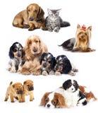 Cães do grupo imagem de stock
