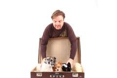 Cães do homem e da chihuahua na mala de viagem Foto de Stock