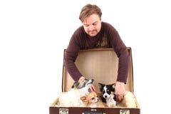 Cães do homem e da chihuahua na mala de viagem Fotos de Stock Royalty Free