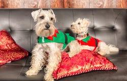 Cães do Natal fotos de stock royalty free