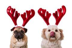Cães do Natal com chifres dos cervos imagens de stock