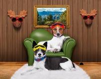 Cães do sofá dos pares do amor imagens de stock royalty free
