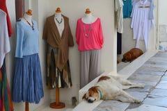 Cães do sono, Grécia, Santorini, Oia Fotos de Stock