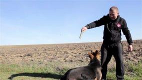 Cães do treinamento do homem filme