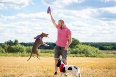 Cães do treinamento no local foto de stock royalty free