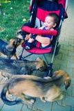 Cães e criança de Payful Fotos de Stock Royalty Free