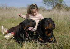 Cães e criança perigosos Fotos de Stock