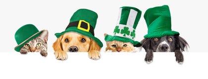Cães e gato do dia do St Patricks sobre a bandeira da Web imagem de stock royalty free