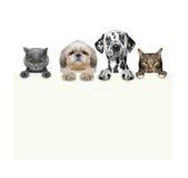 Cães e gato que guardam um quadro em suas patas Imagens de Stock Royalty Free