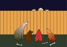 Cães e ladrão de protetor Fotos de Stock
