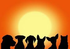 Cães e messageboard Imagens de Stock Royalty Free