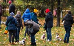 Cães e proprietários no parque no outono Imagens de Stock Royalty Free