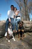 Cães em um parque fotografia de stock
