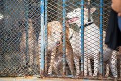 Cães em uma gaiola do metal Imagem de Stock Royalty Free