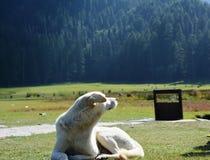 Cães em vales montanhosos Foto de Stock
