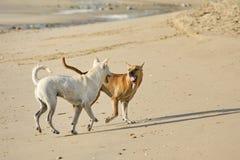 Cães engraçados na praia Fotografia de Stock Royalty Free