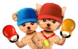 Cães engraçados que treinam com kettlebells no gym do esporte Fotos de Stock Royalty Free