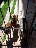 Cães felizes Imagens de Stock