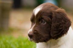 Cães felizes Imagem de Stock Royalty Free