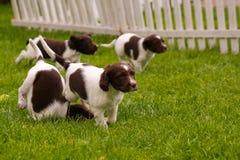 Cães felizes Fotografia de Stock Royalty Free