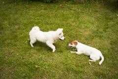 Cães felizes Imagem de Stock