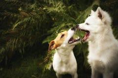 Cães felizes filtrados Imagens de Stock Royalty Free