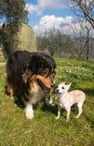 Cães felizes que jogam no jardim Imagens de Stock