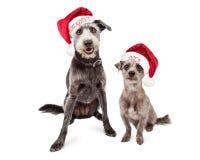 Cães impertinentes e agradáveis engraçados do Natal Fotografia de Stock