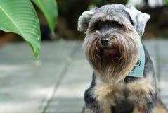 Cães misturados da raça da alameda que sentam-se no assoalho exterior fotografia de stock royalty free