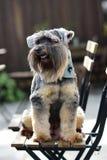 Cães misturados pequenos da raça que sentam-se na cadeira da madeira exterior imagens de stock