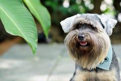 Cães misturados pequenos da raça que sentam-se no assoalho exterior imagens de stock royalty free
