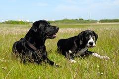 Cães na grama fotos de stock royalty free