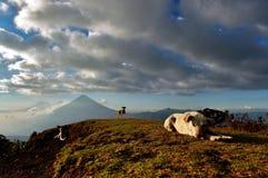 Cães na parte superior da montanha Fotografia de Stock