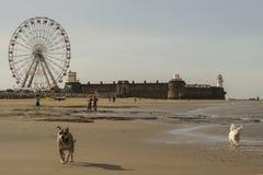 Cães na praia Fotografia de Stock Royalty Free